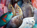 Seafood fishes many are selling on the market Royalty Free Stock Photo