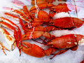 King Crabs Royalty Free Stock Photo