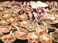 Seafood at the market Stock Photography