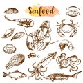 Seafood sketch set. Fish, shrimp, crab, lobster, octopus, mollusks isolated graphic on a white background a set. Vector Royalty Free Stock Photo