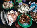 Seafood stall at thai fresh market Royalty Free Stock Photo