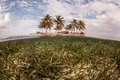 Seagrass and remote tropical island a meadow surrounds a in the caribbean sea coconut palms grow on the tiny sand covered Royalty Free Stock Image