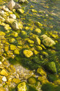 Seagrass among the stones from the shore romania agigea Royalty Free Stock Image