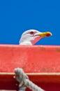 Seagull as a deck passanger on a ship to athos chalkidiki greece Stock Photo