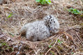 Seagull baby and egg in the nest adorable grey sleeping Stock Photos