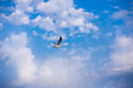 Seagull on a background of blue sky and clouds Royalty Free Stock Photo