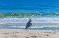 Seagull on the beach atlantic ocean long island Royalty Free Stock Photo