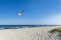 Seagull on the beach with blue sky as background Stock Images