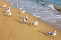 Seagull on the beach at day time Royalty Free Stock Photography