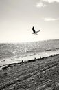 Seagull on the beach flying by Stock Photo