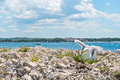 Seagull on the beach in Istria Royalty Free Stock Photo