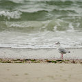 Seagull on the beach a at in ocean grove a small town new jersey Royalty Free Stock Photo