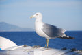 Seagull on the boat as a passenger Royalty Free Stock Photography