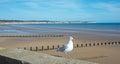 Seagull At Bridlington