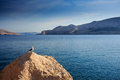 Seagull on a cliff by the adriatic sea Royalty Free Stock Photos