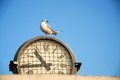 Seagull on a clock Royalty Free Stock Photography