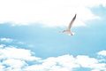 Seagull in the clouds flying Royalty Free Stock Image