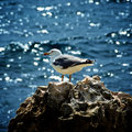 Seagull on Crag Royalty Free Stock Photo