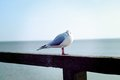 Seagull on fence by sea
