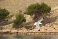 Seagull in flight white among small hills Royalty Free Stock Photos
