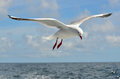 Seagull fly above the sea Royalty Free Stock Photo