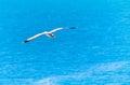 Seagull Flying Over The Medite...