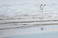 Seagull flying over the sea horizontal photo Royalty Free Stock Photography