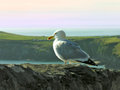 Seagull glaucous gull larus hyperboreus on a rock on a background of the atlantic ocean ireland Stock Images