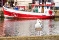 Seagull harbor italy Royalty Free Stock Photography