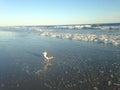 A seagull on lido beach long island new york Stock Photo