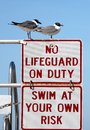 Seagull Lifeguards Stock Image