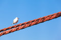 Seagull looking right up bird sitting at a thick rope blue sky background Stock Photo