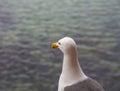 Seagull Looking At Sea