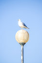 A seagull perched a lamp set against a bright blue sky Royalty Free Stock Photo