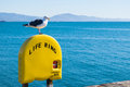 Seagull perched on life ring in Santa Barbara beach Royalty Free Stock Photo
