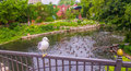 Seagull Perched on Railing Royalty Free Stock Photo