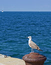 Seagull perching on a bollard Royalty Free Stock Photography
