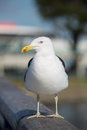 Seagull on pier at new brighton beach in christchurch new zealand Stock Images