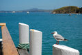 Seagull pier post waiheke island new zealand Stock Images