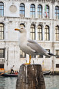 Seagull on pole Royalty Free Stock Image
