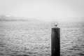 Seagull on a pole Royalty Free Stock Photo