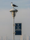 Seagull in punta del este uruguay on a lamp pole the harbour of Stock Photography