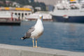 Seagull on the railing of the embankment. Royalty Free Stock Photo