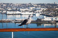 Seagull on the railing of the ship Royalty Free Stock Photo