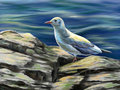 Seagull resting on some rocks near to the sea digital illustration Royalty Free Stock Photos