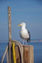 A seagull rests on a pole at the end of a pier. Stock Image