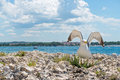 Seagull on the rocky beach in Istria Royalty Free Stock Photo