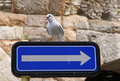 Seagull seats on a road sign Royalty Free Stock Image
