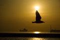 Seagull shade in the sunset a is flying at two ships are visible at background with a breakwater Royalty Free Stock Photography