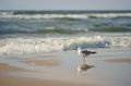 Seagull on the shore view of a lonely standing baltic seashore with its reflection water Royalty Free Stock Images